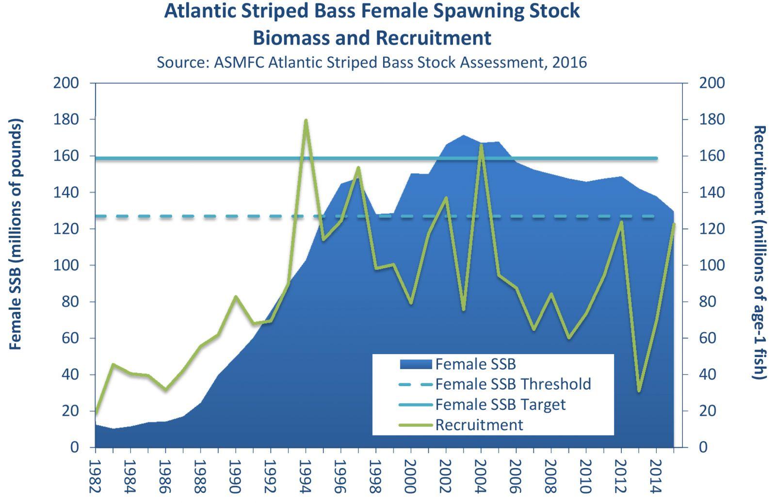 Atlantic Striped Bass
